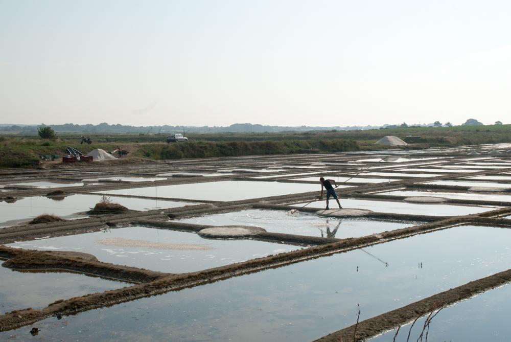 Cet été, donnez quelques heures pour faire connaitre la production de sel à Mesquer